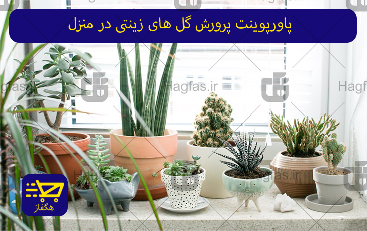 پاورپوینت پرورش گل های زینتی در منزل