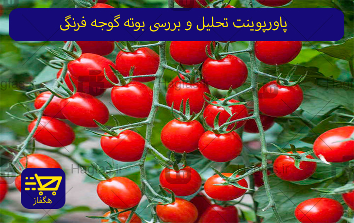 پاورپوینت تحلیل و بررسی بوته گوجه فرنگی