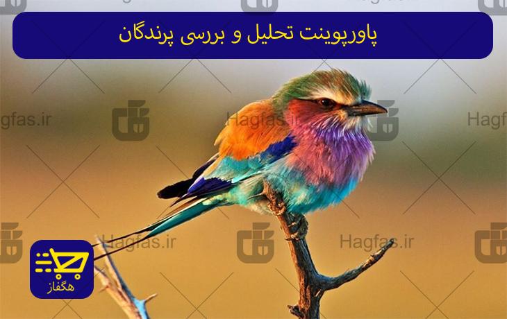 پاورپوینت تحلیل و بررسی پرندگان