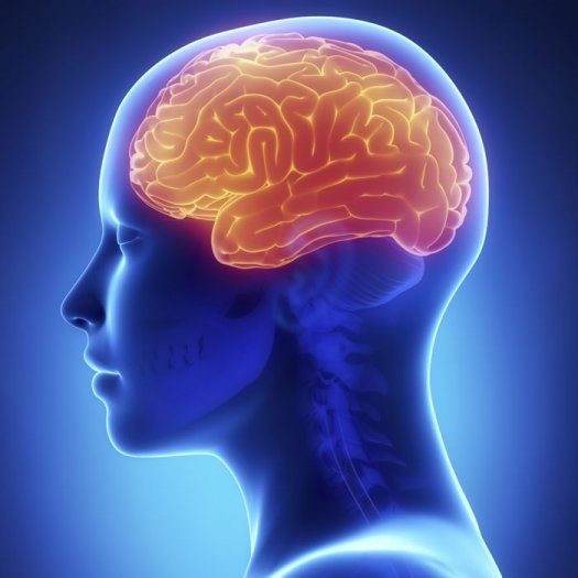 پاورپوینت تحلیل و بررسی مغز و مسائل مربوط مغز